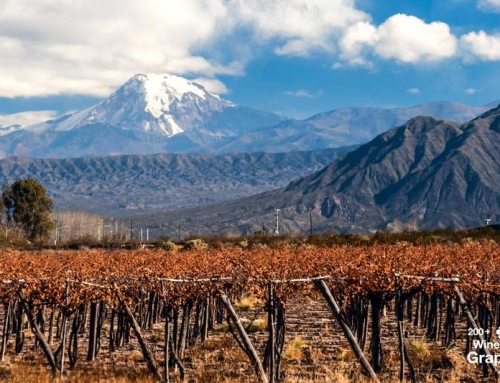 Mendoza, overview and recent statistics